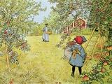 The Apple Harvest Giclée-tryk af Carl Larsson
