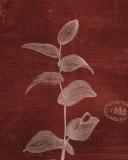 Leaf Study IV Poster by Paula Scaletta