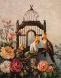 Cockatiel and Roses Affiche par Maxine Johnston