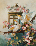 Cockatoo and Blossoms Affiches par Maxine Johnston