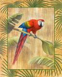 Scarlet Macaw Stampe