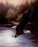 Adler beim Beutefang Kunstdrucke von T. C. Chiu
