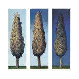 Zypressen Blau 1998 Limited Edition by Folkert Rasch