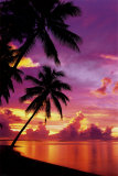 Tahitiaanse zonsondergang Poster