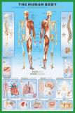 Der menschliche Körper Kunstdrucke