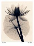 Tropische waterlelie Kunst van Judith Mcmillan