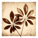 Cassava Leaves Prints by Michael Mandolfo