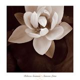Amazon Lotus Plakat af Rebecca Swanson
