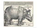 The Indian Rhinoceros is the Largest of the Asian Spiecies Impressão giclée por Albrecht Dürer