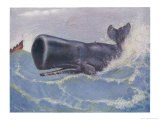 Sperm Whale Physeter Macrocephalus Giclee Print by Louis A. Sargent