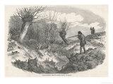 Rabbit Shooting Near Tunbridge Kent Reproduction procédé giclée par  Duncan