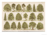 Chart of British Forest Trees Giclée-tryk