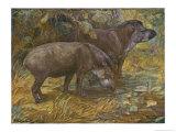 Two American Tapir Lámina giclée por Winifred Austen