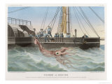 """Calmar de Bouyer Giant Squid Caught by the French Vessel """"Alecto"""" off Tenerife Canary Islands Giclée-Druck von E. Rodolphe"""