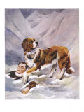 Saint Bernard Finds a Man Trapped in the Snow Giclee Print by A. Scott Rankin