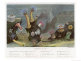 An Assortment of Sea Anemones Giclée-tryk af P. Lackerbauer