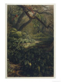 Xanthosoma and Other Exotic Flora and Birds in the Brazilian Jungle Giclee Print by J. Selleny