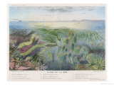 Various Seaweed and Other Submarine Flora Giclée-tryk af P. Lackerbauer