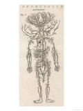 The Arteries of the Human Body Giclee Print