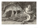 Mermaid Compared with the Manatee at the Zoological Gardens London Giclée-Druck