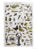Arthropods Including a Wide Variety of Insects Giclée-tryk