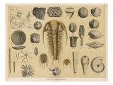 Life-Forms of the Paleozoic Epoch Giclée-Druck von Ferdinand Von Hochstetter