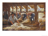 In an Australian Sheep Shearing Shed Giclée-tryk af Percy F.s. Spence