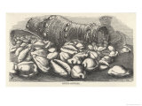 Money-Cowries Giclee Print by J.g. Wood's