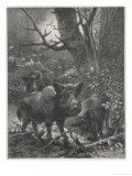 Herd of Wild Boar Wander Through the Woods Giclee-trykk av  Specht