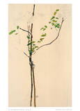 Young Tree Reproduction pour collectionneur par Egon Schiele