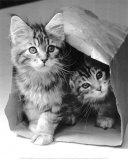 esconde-esconde Posters por Vikki Hart