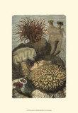 Im Meer II Kunstdrucke