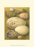 Bird Egg Collection I Posters