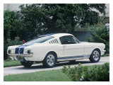 1965 Shelby GT350 Giclee Print by David Newhardt