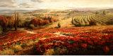 Red Poppy Panorama Poster di Roberto Lombardi