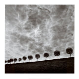 Ten and a Half Trees, Peterhof, Russia, 2000 Poster von Michael Kenna