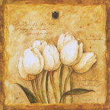 Tulips of my Travels Prints by Herve Libaud