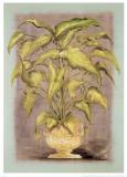 Jarrones Plantas I Poster by L. Romero