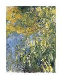 Iris Posters por Claude Monet