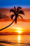 夕陽の椰子 写真