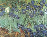 Iris Poster av Vincent van Gogh
