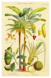 Plants Used As Food Prints by William Rhind