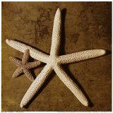 Starfish Posters by Caroline Kelly