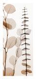 Eucalypti I Kunst af Steven N. Meyers