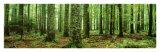 Regenwald Poster