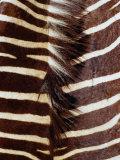 Zebra Skin Detail, Durban, Kwazulu-Natal, South Africa Lámina fotográfica por Richard I'Anson