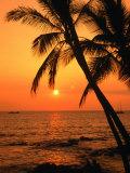 A Couple in Silhouette, Enjoying a Romantic Sunset Beneath the Palm Trees in Kailua-Kona, Hawaii Impressão fotográfica por Ann Cecil
