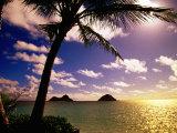 Palm Trees on the Beach at Sunset, Lanikai, U.S.A. Lámina fotográfica por Ann Cecil