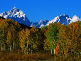 Autumn Colours of Trees with Snow Capped Mountains in Distance, Grand Teton National Park, U.S.A. Lámina fotográfica por Christer Fredriksson