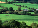The Fields and Farmhouses of County Cork, Ireland Photographic Print by Doug McKinlay